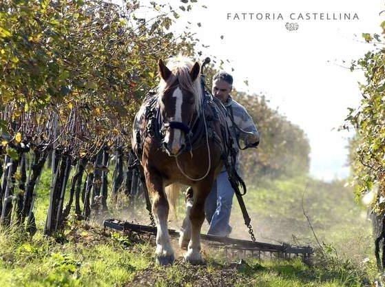 Fattoria Castellina